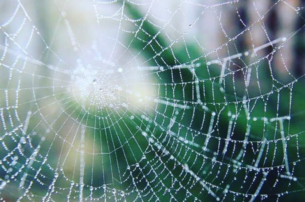 spider's web with waterdrops on it which are out of focus on a green background