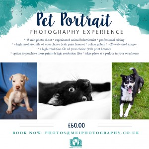 Pet-Portrait-Package-September-2016